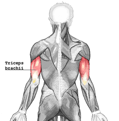 Tricep Strength and shoulder stability